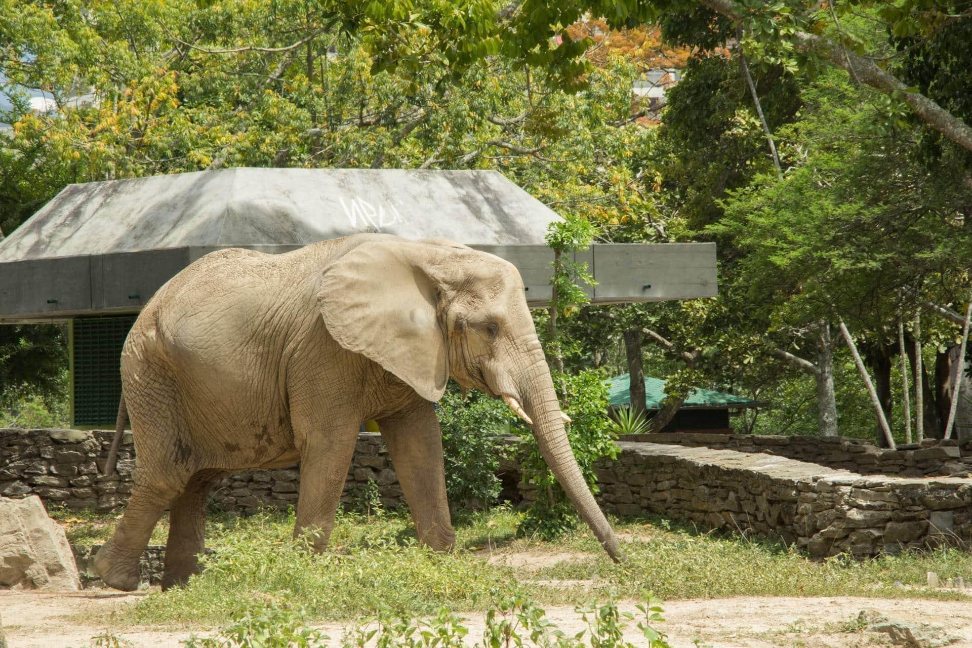 Resultado de imagen para ruperta la elefanta de caricuao
