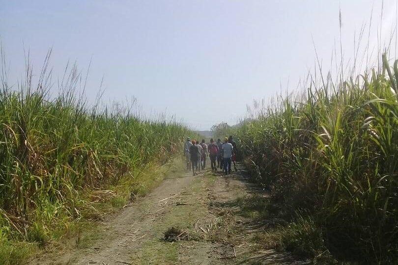 Cañicultores de Carabobo
