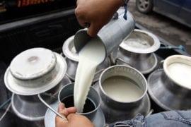 producción láctea