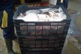 Venta de pollo en Caracas