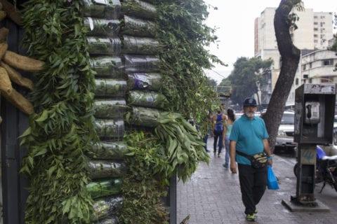 plantas para uso medicinal